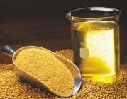 تولید کنجد در استان ۲۰ درصد افزایش یافت