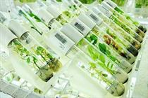 صادرات گیاهان دارویی کشور به ۳.۲ میلیارد دلار افزایش مییابد