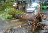 توفان در البرز منجر به مصدومیت ۷ شهروند شد