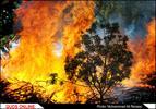 آتش سوزی در پارک جنگلی بابا قدرت مشهد