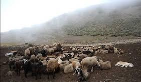 مراتع زنجان