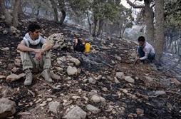 آتش سوزی در جنگل های ایلام