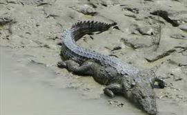 حمله تمساح غول پیکر