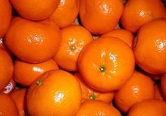 کشف تریلی نارنگی قاچاق، در میدان مرکزی میوه
