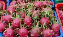 از کشف میوه قاچاق در حجره رئیس اتحادیه ترهبار تا امحای ۳۱ تن میوه