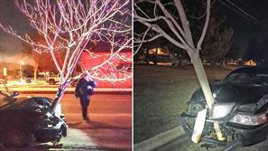 فیلم / خودرو همراه با یک درخت ۴ونیم متری در بزرگراه