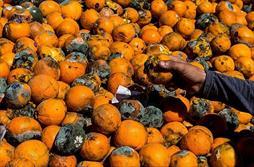 پرتقالهای خراب متعلق به کیست؟