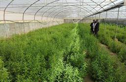 گلخانه گیاهان دارویی