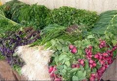 جایگاه بلند سبزی خوردن در سفره ایرانی