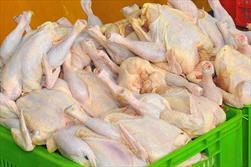 تولید مرغ