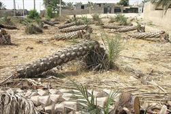 خشکسالی دشتستان