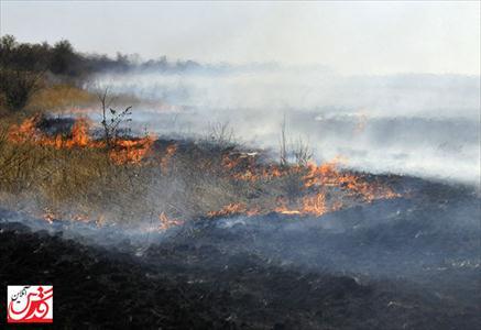 انفجار باعث آتش سوزي در جنگل شد