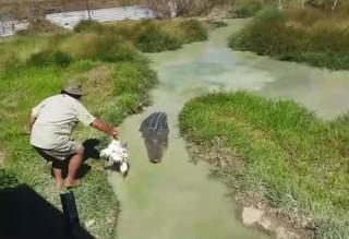 فیلم / سواری گرفتن از تمساح غولپیکر
