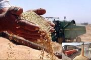 گندمکاران استان قزوین در برداشت محصول خود شتاب نکنند