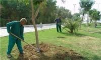 کارگران فضای سبز