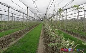 تولیدات گلخانه ای