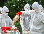 ۲۵ میلیون پرنده مبتلا به آنفولانزا سال گذشته معدوم شد
