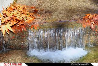 پاییز در محلات/گزارش تصویری