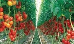 محصول گلخانه ای