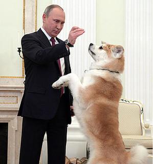 هدیه ژاپن - سگ - پوتین