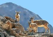 بازدید از گنجینه تنوع زیستی خراسان جنوبی رایگان است