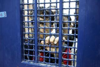اسیر زندان فلسطینی