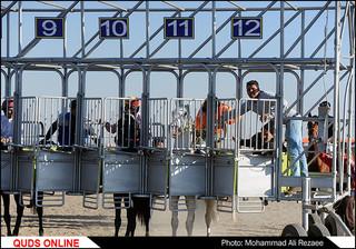 مسابقات کورس اسب دوانی قهرمانی کشور