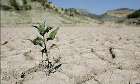خسارتهای ناشی از خشکسالی
