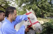 بیش از چهار صد و پنجاه راس اسب تست مشمشه شدند