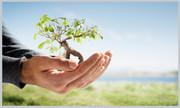 کاشت ۵۰ هزار اصله درخت در کرج تا پایان سال