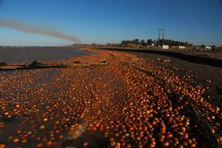 سواحل پرتقالی