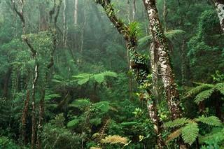 جنگل آمازون
