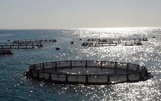پرورش ماهی در دریا