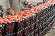 وضعیت گوجه فرنگی از حالت قرمز خارج شد