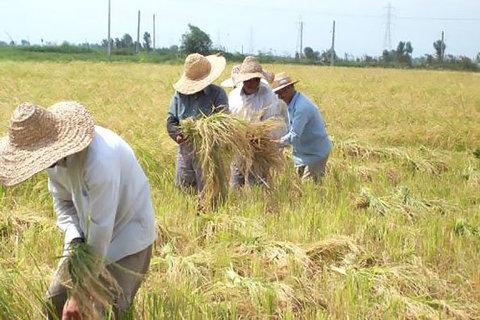 کشاورزی لرستان