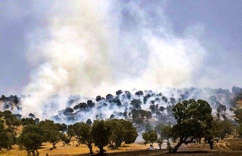 کاهش آتش سوزی جنگل های بلوط در ایلام