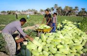 اسناد توسعه بخش کشاورزی سیستان و بلوچستان در مجلس بررسی می شود