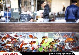 مراکز فروش کلی ماهی قرمز در تهران/ گزارش تصویری