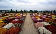 «محلات» پایتخت گل و چشمه های آب گرم ایران