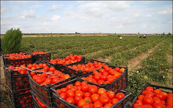 گوجه کاران