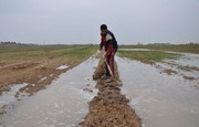 بار کمکاری مسوولان جهاد کشاورزی بر دوش کشاورزان قزوینی
