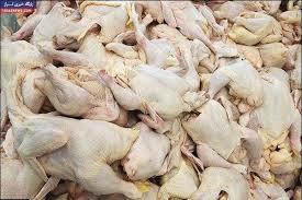 تولید گوشت مرغ