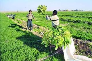 اختلافات حوزه کشاورزی