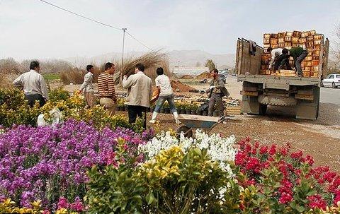 تولید گل در محلات، دریافت مجوز در کرج، صادرات از تهران