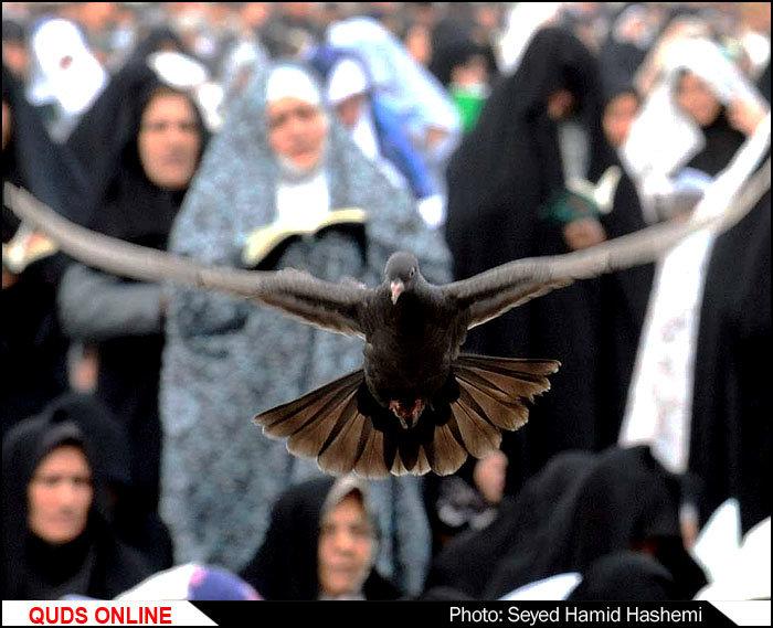 عکس خاصی در حرم امام رضا علیه السلام