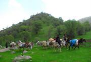 عشایر ایلام سالانه ۳۵۰۰ میلیارد ریال محصول تولید می کنند