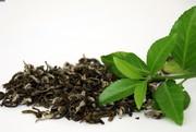 ۳۰۰۰تن چای به فروش نرفته در کارخانههای چای خاک می خورد