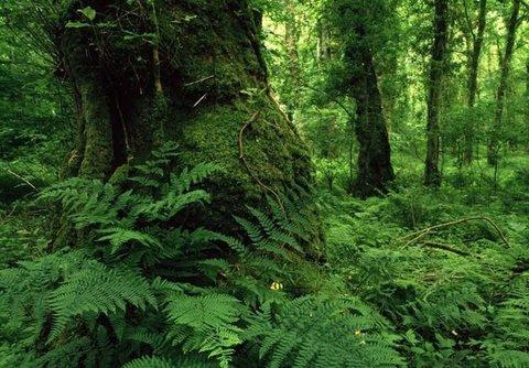 همایش ملی جنگلهای شمال ایران در گیلان آغاز شد