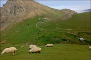 چرای دام چالش مراتع آذربایجان غربی؛دامداران ناراضی هستند
