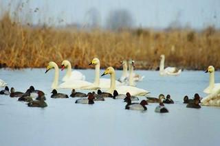 لانه گزینی پرندگان